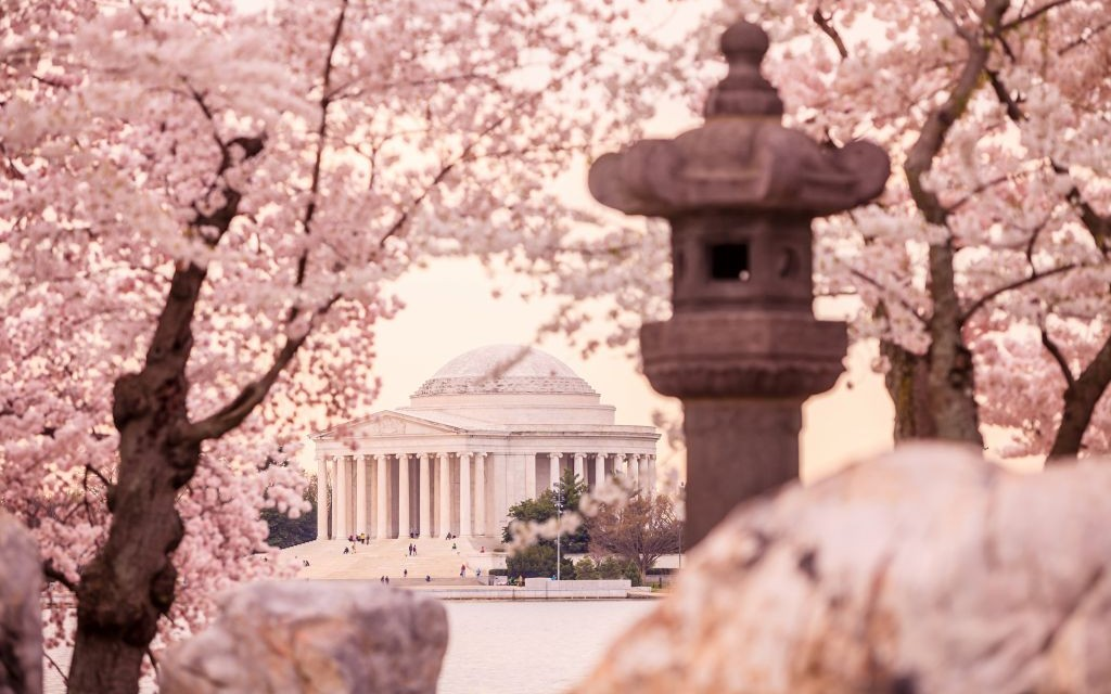 The Jefferson Memorial during the Cherry Blossom Festival in Washington, D.C. © F11photo | Dreamstime 40640118