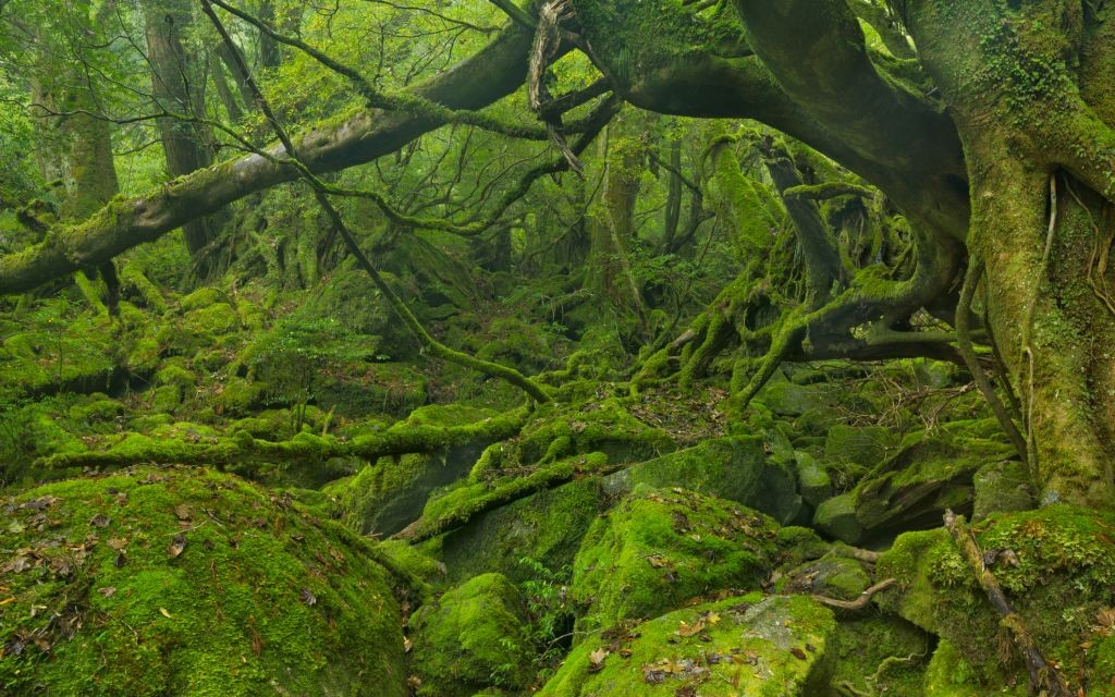 Yakushima Forest, Japan © Sara Winter | Dreamstime 58509106